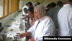 Des techniciennes formées à l'évaluation des grains de café (VOA)
