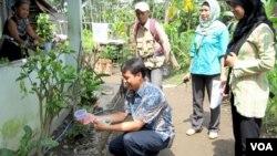 Pelepasan nyamuk yang mengandung bakteri wolbachia oleh tim peneliti UGM dan warga di Yogyakarta. (VOA/Nurhadi Sucahyo)