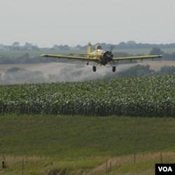 Pesawat ini menyemprotkan pestisida di atas ladang. Jenis pestisida organofosfat disebut beresiko menyebabkan hiperaktifitas.