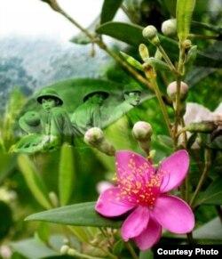 Nhiều người sử dụng hình ảnh hoa sim tím để tưởng nhớ các chiến sĩ Việt hy sinh trong chiến tranh biên giới năm 1979.