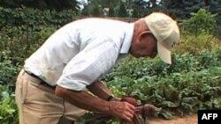 У США набирають популярності ферми «Збери сам»