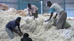 Business is strong at Makueni Ginneries in Kenya's Eastern province