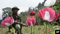 Thai soldier in Tak province during annual search and destroy opium eradication operation, Jan. 2007 (file photo).