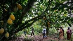 São Tomé e Príncipe prepara-se para o acordo de livre comércio africano