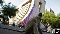 نئی دہلی میگا گیمز کی سیکیورٹی کے لیے لنگوروں کے دستے