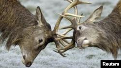 全球野生动物数量减少