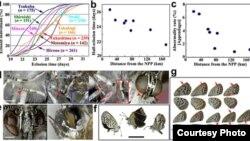 Radiasi nuklir dari PLTN Fukushima menyebabkan cacat fisik pada kupu-kupu. (Science Report).