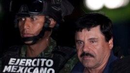 Etja për famë e El Chapos ndihmon në kapjen e tij