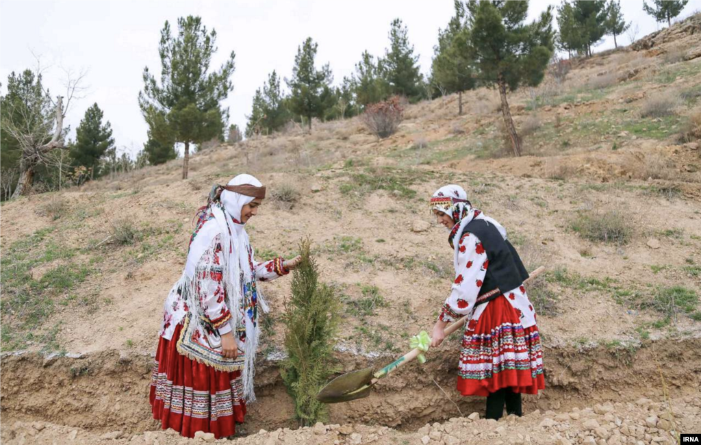 غرس نهال در استانها عکس: وحید خادمی