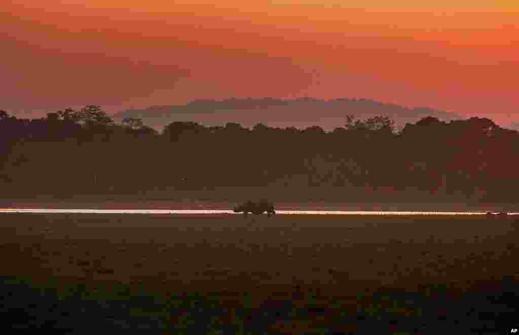 A one-horned rhinoceros grazes as the sun sets in the Agoratoli range of Kaziranga National Park, east of Gauhati, in the northeastern state of Assam, India.