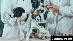 «Космические собаки». Courtesy photo