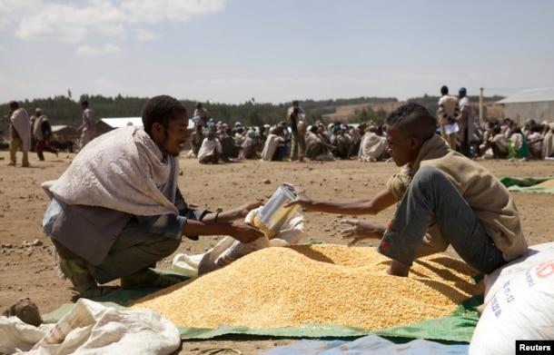FILE - A farmer receives grain at an emergency food aid distribution in the village of Estayish in Ethiopia's northern Amhara region, Feb. 11, 2016.