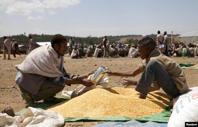 A farmer receives grain at an emergency food aid distribution in the village of Estayish in Ethiopia's northern Amhara region, Feb. 11, 2016.