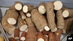Sianida yang terdapat di dalam singkong pahit merupakan bisa menyebabkan keracunan pada orang yang memakannya, dan bisa mengakibatkan penyakit konzo (foto: Dok).