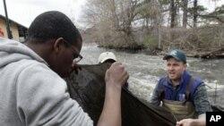 Chris Bowser dari Departemen Perlindungan Lingkungan Negarabagian New York, kanan, dan siswa SMA Richard Bonnet memeriksa jaring untuk menangkap belut di Fall Kill. Bowser memimpin sukarelawan pengamat yang mengumpulkan data bagi para ilmuwan lain (foto:
