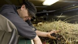 Dave Krick, owner of the Red Feather Lounge and Bittercreek Ale House in Boise, Idaho, in 2010 digging for worms in compost used for purposes such as filling the restaurant's outdoor planters