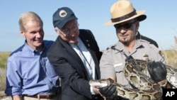 Secretary of Interior Ken Salazar, center, and Sen. Bill Nelson, D-Fla., left, look at at 13-foot python held by National Park Service Supervisor Ranger Al Mercado in the Everglades, Fla., Tuesday, Jan. 17, 2012.