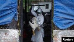 2일 네팔의 박타푸르에서 긴급대응팀이 조류독감 검사를 하고있다. (자료사진)