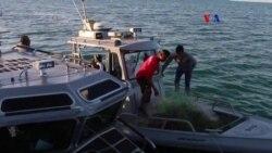 EE.UU. y México de la mano para salvar a la vaquita marina