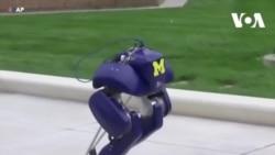 Robot cứu hộ hai chân