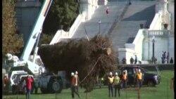 Halkın Ağacı ABD Meclisi Önündeki Yerini Aldı