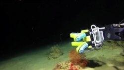 柔软机器人海底温柔探秘