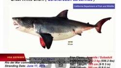 California kết tội một người Việt sát hại cá mập