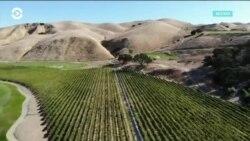 Американские виноделы на линии фронта в «торговой войне» США и КНР