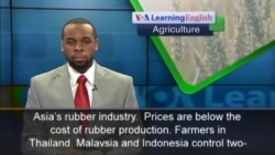 Low Prices Hurt Asian Rubber Farmers