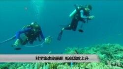 科学家改良珊瑚 抵御温度上升