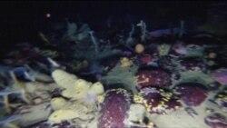 Iniciativas para mapear suelos de los océanos