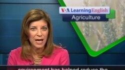 Anh ngữ đặc biệt: Big Farm Little Farm (VOA)