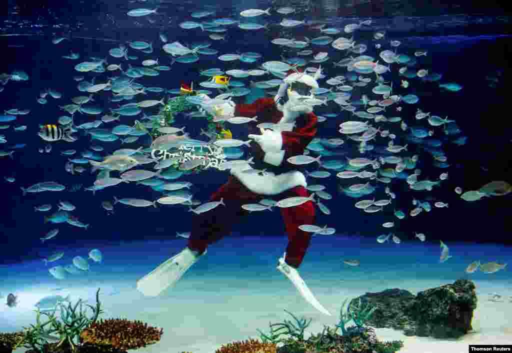 일본 도쿄의 선샤인 수족관에서 산타클로스 복장의 잠수부가 크리스마스 수중 공연을 하고 있다.