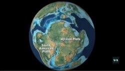 Монозаврів з Анголи привезли до Вашингтона. Відео