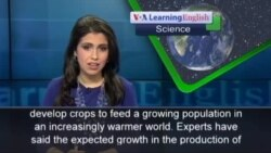 Gene in Plant Could Increase Crop Production