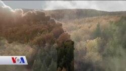Karbondioksitle Savaş İçin Ormanlar Canlandırılıyor