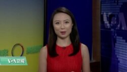 VOA连线(魏之):杨安泽在民主党辩论中表现不俗