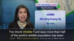 Anh ngữ đặc biệt: Living Planet Report (VOA)