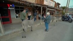 Burros Overtake Arizona Town