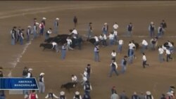 Texas - rodeolar vatani
