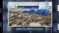 New Words: Herculean