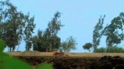 埃及农民对未来不抱幻想