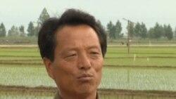 看天下:朝鲜取消农民上缴公粮定额