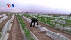 Farming Without Water (VOA On Assignment Mar. 21, 2014)