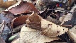 Descubren nuevos beneficios de las hojas
