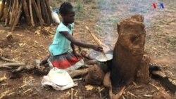 Deslocados de Vanduzi querem independência económica através da agricultura