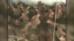 Nhà sản xuất Mỹ phủ nhận bán phá giá thịt gà ở Việt Nam