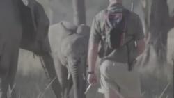 Orphaned Elephants Translocated ...