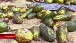 Tanzania: Dê, trái cây 'xét nghiệm dương tính' với Covid