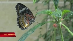 Bảo tàng bướm